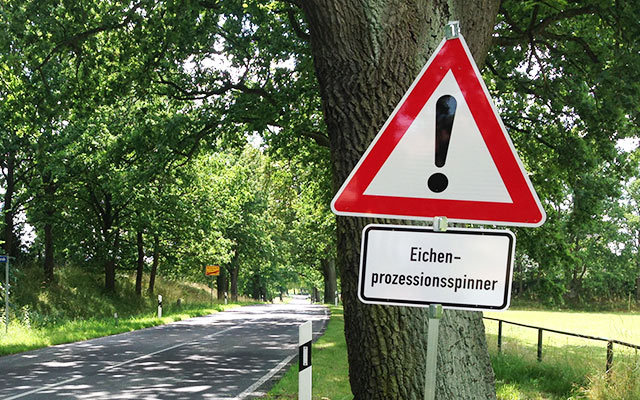 Beseitigung Nest Eichenprozessionsspinner Bad Kissingen